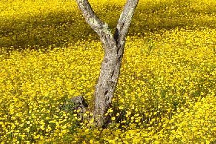 campo de floressilvestres