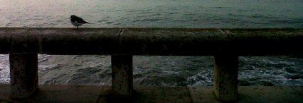 IMG06130-20121121-0916B